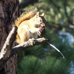 This photograph of a Squirrel was taken in the Black Hills of South Dakota #squirrel
