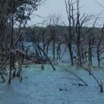 This photograph was taken at Waubay Lake in Eastern South Dakota. The pic shows seasonal flooding of the lake.  #waubay